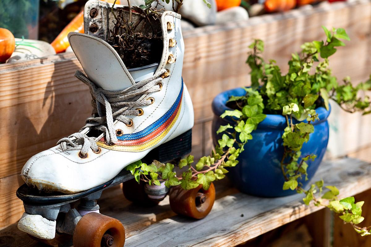 Un roller posé sur près d'une plante.