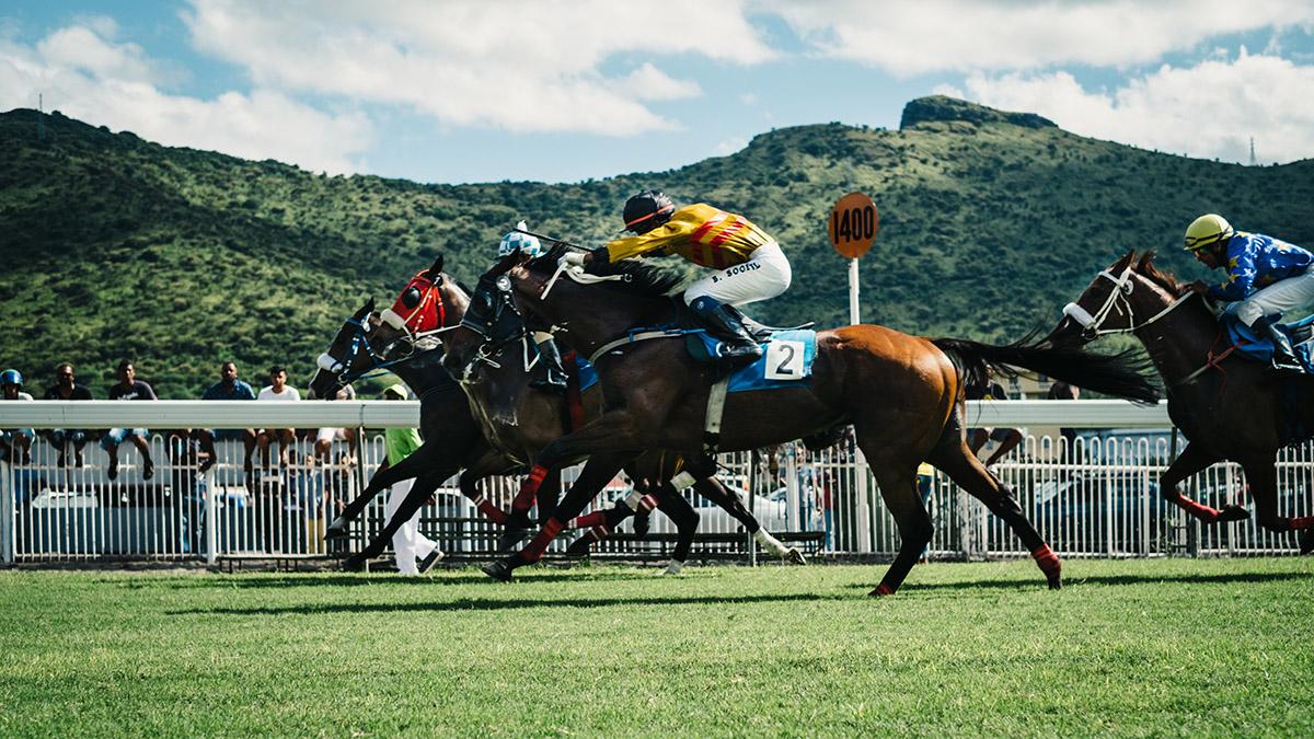 Course de chevaux sur herbe