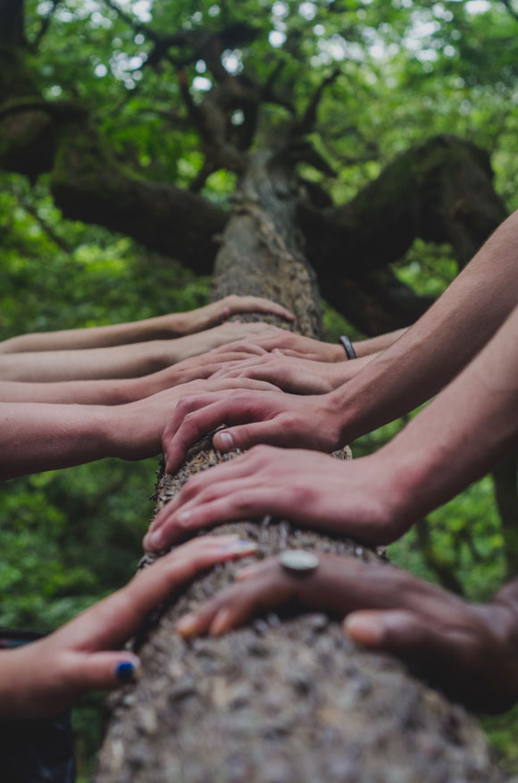 Equipe réunissant leurs mains sur un tronc d'arbre lors d'un team building sur l'écologie
